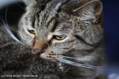 Katzen2011_IMG_2914