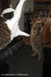 Katzen2011_IMG_3611