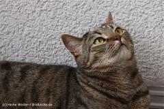 Katzen2011_IMG_4811