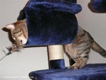 Katzen2011_P1180391