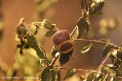 Tiergarten Bernburg 030710-IMG_5369