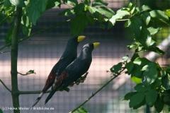 Tiergarten Bernburg 030710-IMG_5604