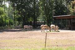 Tierpark BerlinIMG_6948