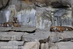 Tierpark BerlinIMG_7170_7313