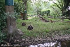 Tierpark Essehof 250610-IMG_4853