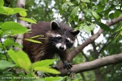 Tierpark Essehof 250610-IMG_4883