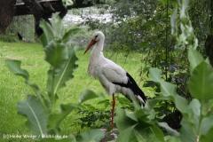 Tierpark Essehof 250610-IMG_4898