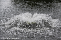 Tierpark Essehof 250610-IMG_4905
