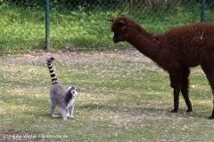 Tierpark Essehof 250610-IMG_4935