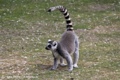 Tierpark Essehof 250610-IMG_4937