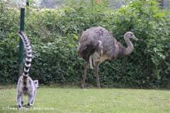Tierpark Essehof 250610-IMG_4948