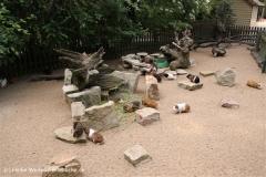 Tierpark Essehof 250610-IMG_4968