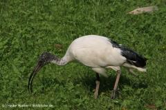 Tierpark Essehof 250610-IMG_4975