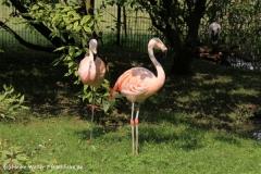 Tierpark Essehof 250610-IMG_4978