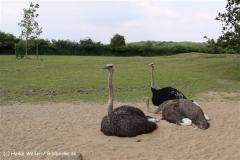 Tierpark Essehof 250610-IMG_5011