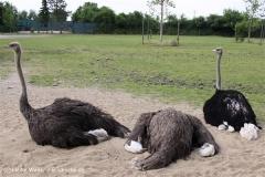 Tierpark Essehof 250610-IMG_5016