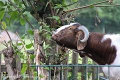 Tierpark Essehof 250610-IMG_5025-2