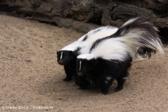 Tierpark Essehof 250610-IMG_5043