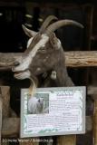 Tierpark Essehof 250610-IMG_5060-2