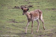 Tierpark Essehof 250610-IMG_5067