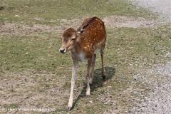 Tierpark Essehof 250610-IMG_5078