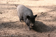 Tierpark Essehof 250610-IMG_5113