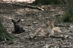 Tierpark Essehof 250610-IMG_5130