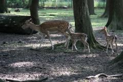 Tierpark Essehof 250610-IMG_5139