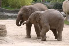 Tierpark_Hagenbeck_180516_IMG_3875