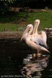Tierpark_Hagenbeck_180516_IMG_3956