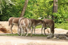 Tierpark_Hagenbeck_180516_IMG_3976