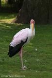 Tierpark_Hagenbeck_180516_IMG_4207