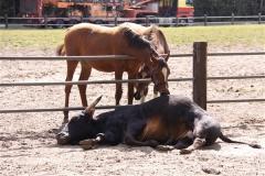 TierparkStroehen110909IMG_1089