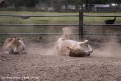 TierparkStroehen110909IMG_1094