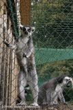 TierparkStroehen110909IMG_1096