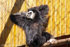 TierparkStroehen110909IMG_1153