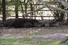 TierparkStroehen110909IMG_1166