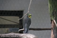 TierparkStroehen110909IMG_1180