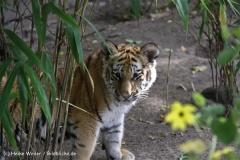 TierparkStroehen110909IMG_1208