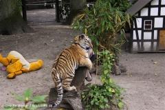 TierparkStroehen110909IMG_1228