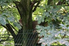 TierparkStroehen110909IMG_1266