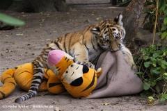 TierparkStroehen110909IMG_1273