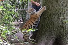 TierparkStroehen110909IMG_1310