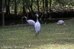 TierparkStroehen110909IMG_1339