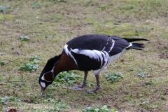 TierparkStroehen110909IMG_1346