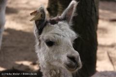 TierparkStroehen110909IMG_1356