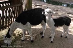 TierparkStroehen110909IMG_1361
