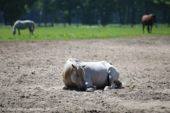 Tierpark_Stroehen_150515_IMG_3660