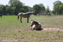 Tierpark_Stroehen_150515_IMG_3660_9593