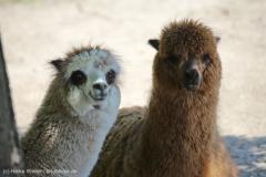 Tierpark_Stroehen_150515_IMG_3671